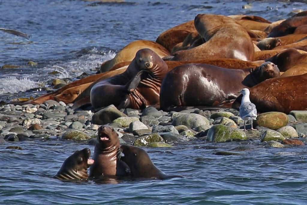 sea-lions-having-fun