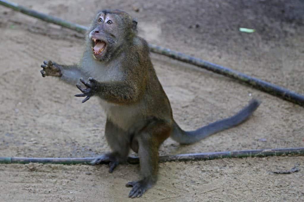 monkey-in-philipines-underground-cave-tour