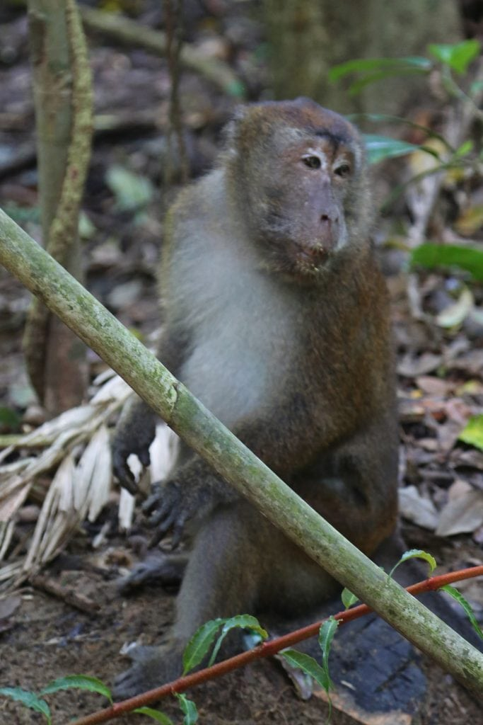 monkey-while-on-underground-cave-tour-in-the-philipines