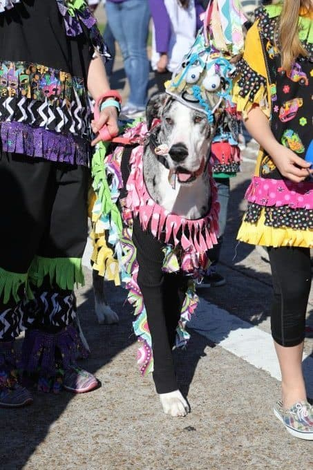 2017 Krewe of Barkus Parade in Lake Charles, Louisiana