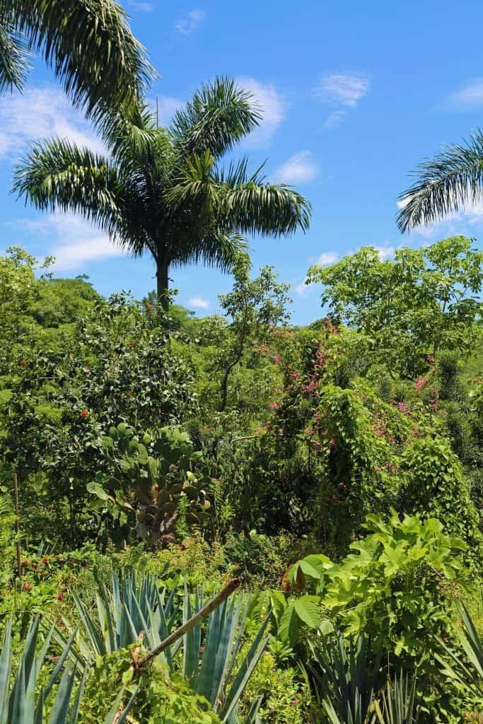 puerto-vallarta-mexico