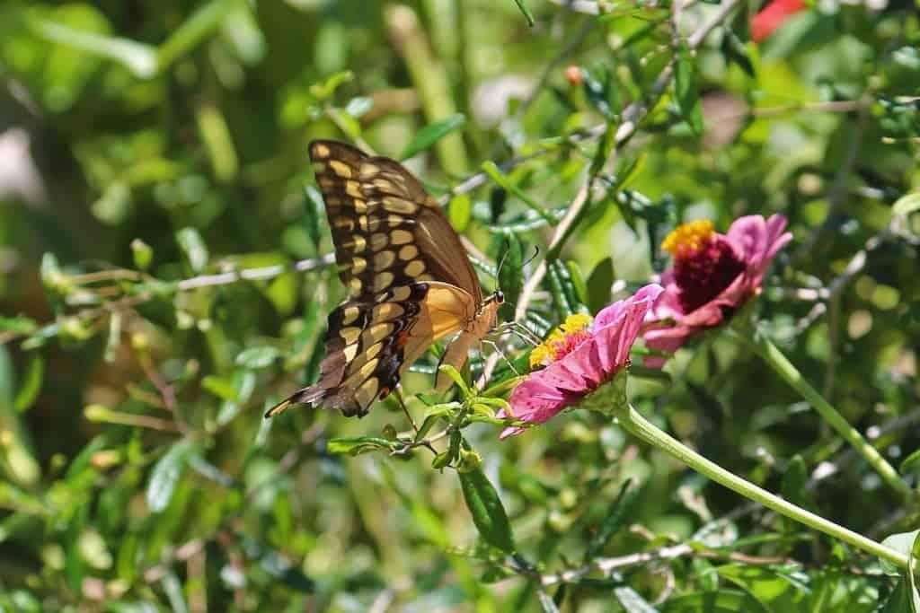 butterfly-in-the-puerto-vallarta-botanical-garden