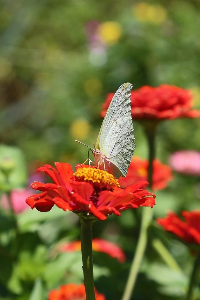 butterfly-on-a-flower
