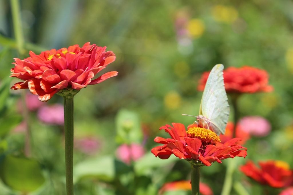 butterfly-on-flower