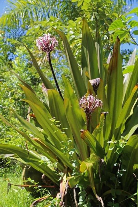 inside-the-puerto-vallarta-botanical-garden