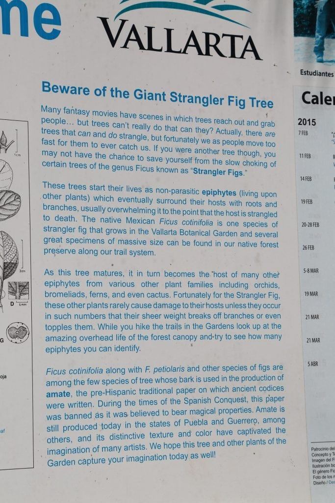 sign-on-strangler-fig-tree-at-puerto-vallarta-botanical-garden