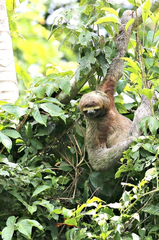 Best Time To Travel To Costa Rica Tammilee Tips