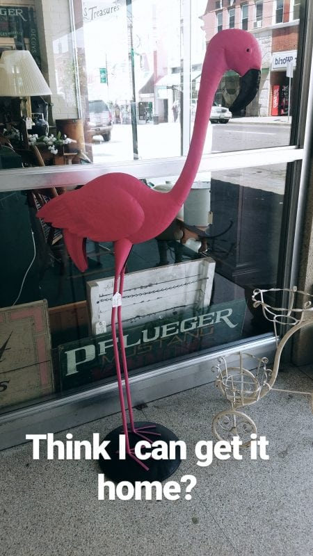 Mount Airy Flamingo